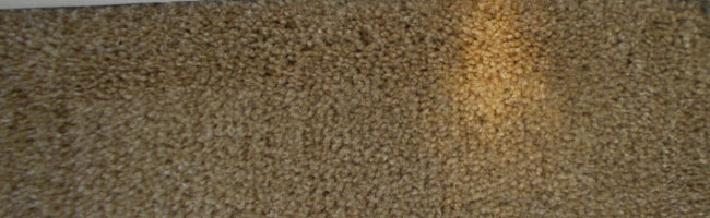carpet-color-repair-spring-hill-tn